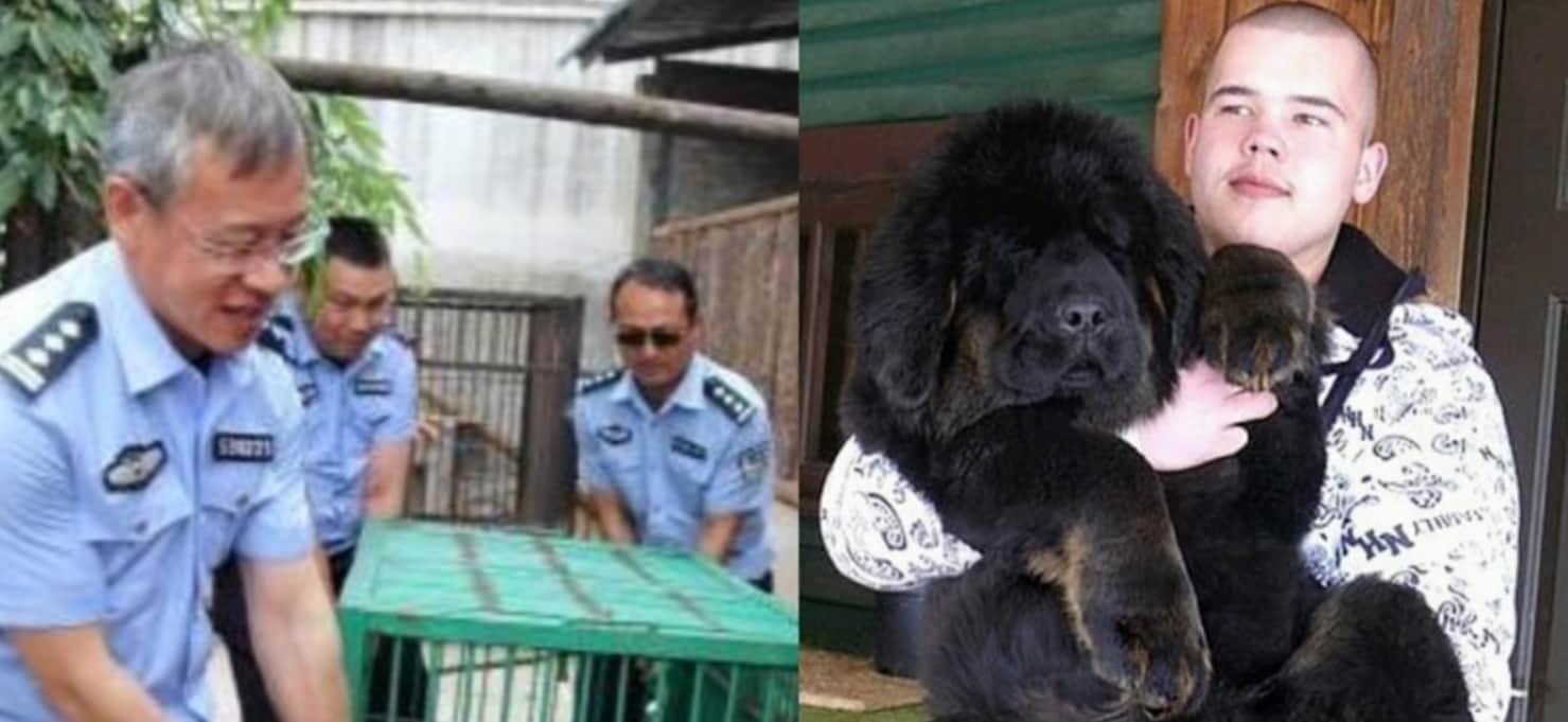 Ein Tierarzt Sieht Den Neuen Hund, Den Diese Familie Adoptiert Hat, Und Ruft Sofort Die Polizei An