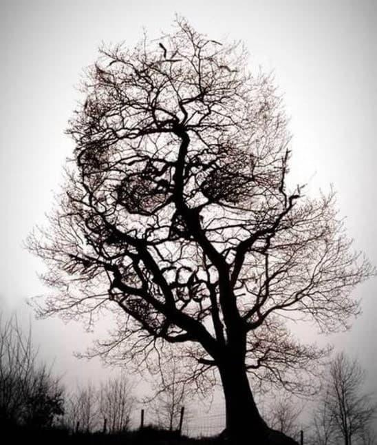 Un Cráneo En Un árbol