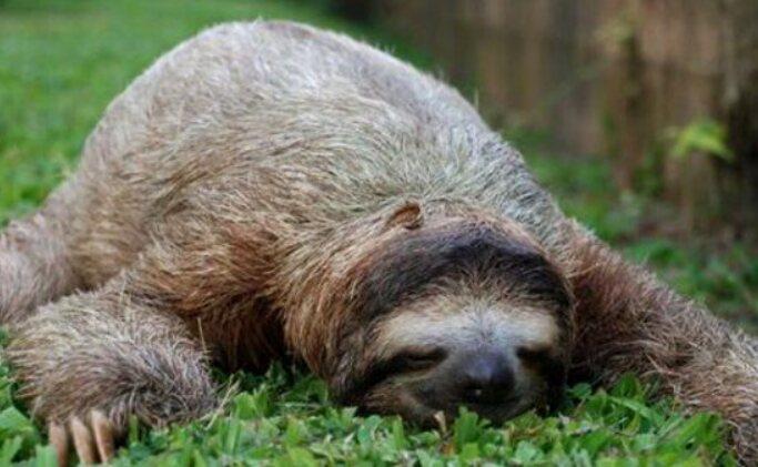 Screenshot 2021 04 04 Irre Tiere, Die Beweisen, Dass Sie Überall Schlafen Können(2)