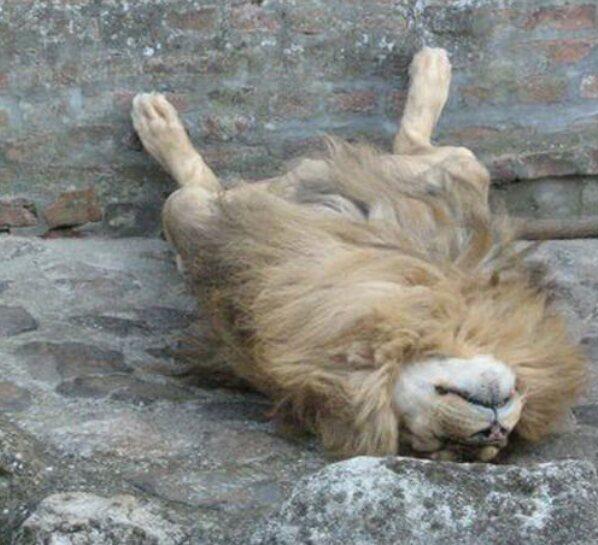 Screenshot 2021 04 04 Irre Tiere, Die Beweisen, Dass Sie Überall Schlafen Können(1)